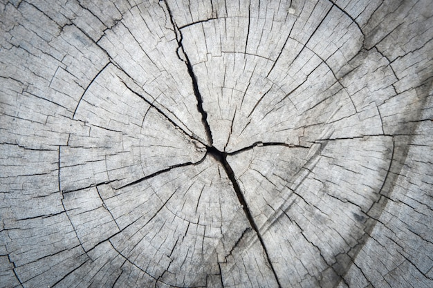 Cut tree trunk crack wood abstract texture background