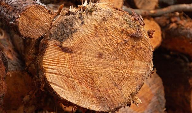 나무 줄기를 잘라 나무 단면 장작 나무 선택적 초점