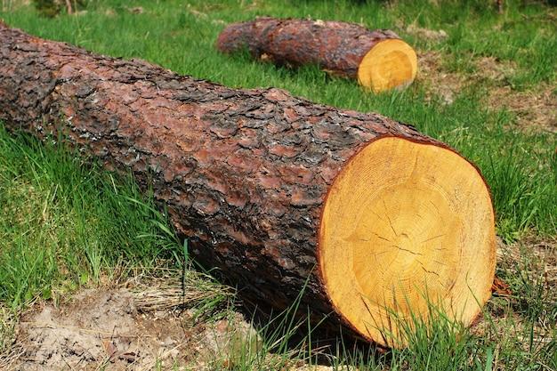 草の上で木の幹を切る