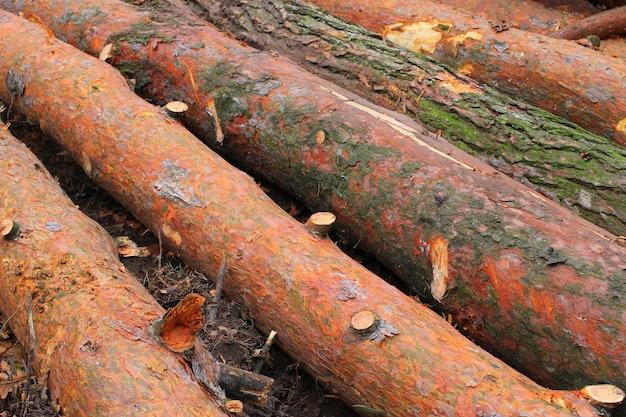 Срезать стволы деревьев в лесу