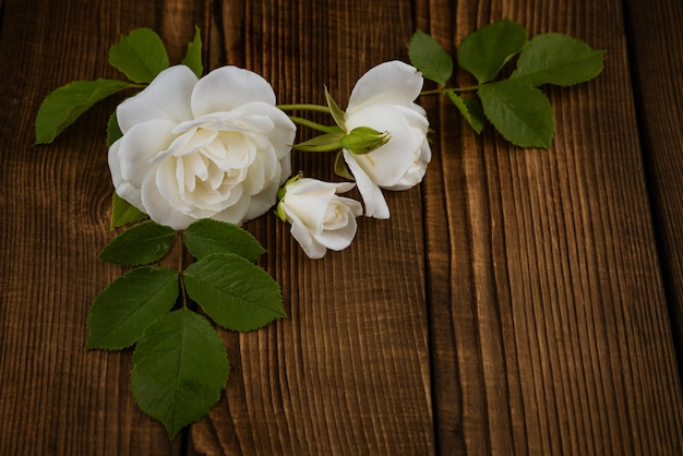 Cut white flowers of a decorative home rose on a brown wooden background inflorescences surrounded b...