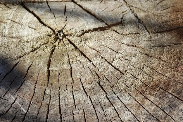 Вырезать дерево с потрескавшимся старым деревянным фоном Premium Фотографии