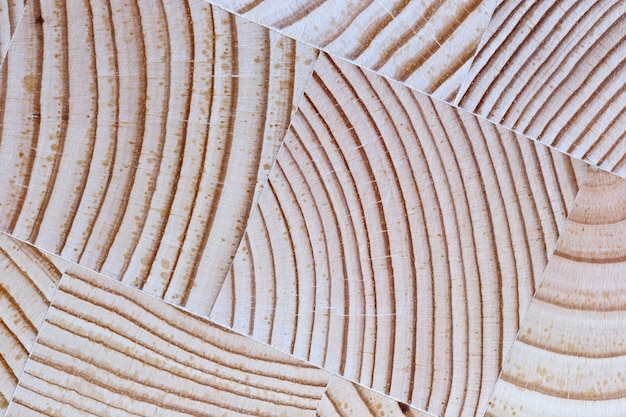 The cut wood with the texture background and growth rings.