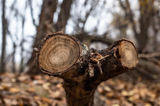 Cut wooden trunks