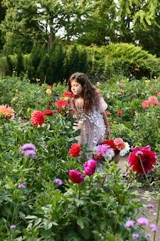 ダリアの花をスニッフィングかわいいかわいい女の子。秋の庭