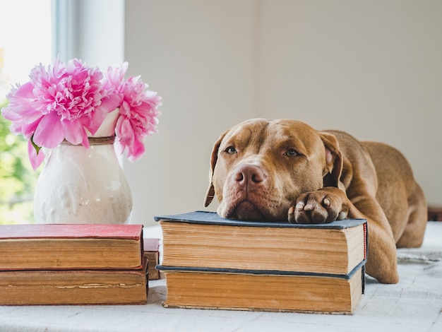 かわいい、愛らしい子犬とビンテージの本。クローズアップ、孤立した背景。ケア、教育、服従訓練、ペットの飼育の概念