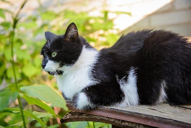 Милый взрослый черно-белый кот сидит в саду летом
