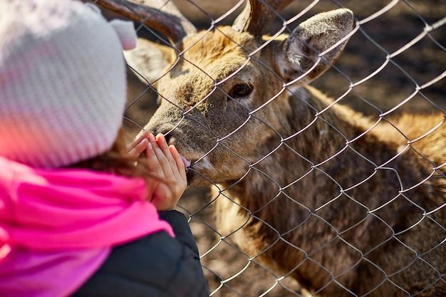 귀여운 성인 사슴은 어린 소녀, 어린이, 자연 들판, 동물원에 사는 사슴의 손을 핥습니다.