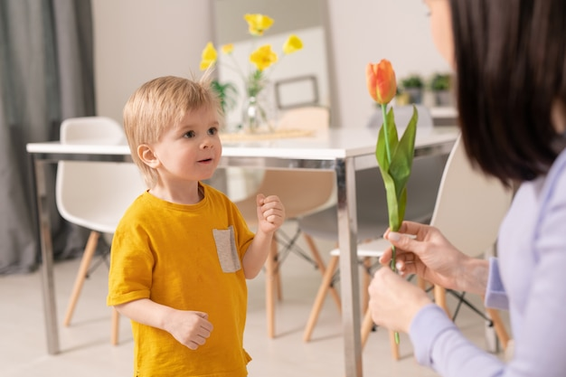 Cute amazed little boy looking at orange tulip held by his mother while standing in front of her on background of otable with chairs