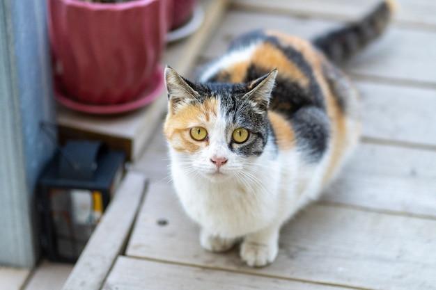 야외에서 나무 판자에 침착하게 앉아 있는 귀엽고 사랑스러운 고양이