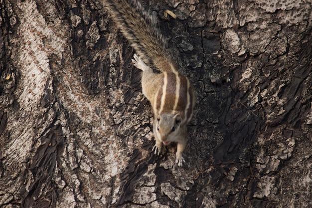 Милая и очаровательная белка или грызун, также известный как бурундук на стволе дерева