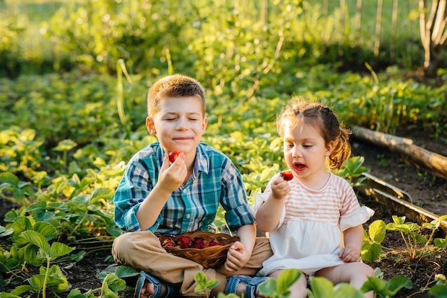 귀엽고 행복한 동생과 취학 연령의 여동생은 화창한 여름날 정원에서 잘 익은 딸기를 수집하고 먹는다.