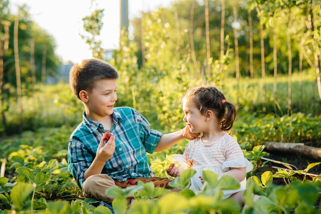취학 연령의 귀엽고 행복한 동생과 여동생이 정원에서 잘 익은 딸기를 모으고 먹습니다.