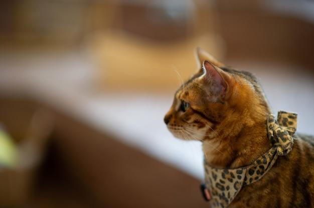 Милый и игривый кот