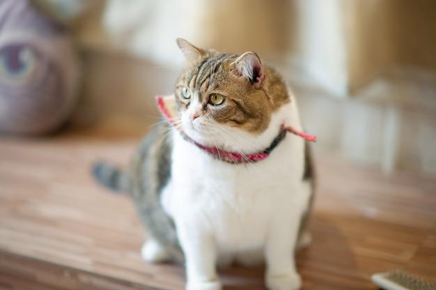 可愛くて遊び心のあるペットの猫が家に座って、忠実な恋人のコンセプト