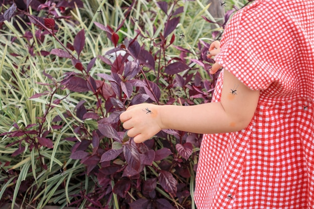 かわいいアジアの女の赤ちゃんは、屋外で遊んでいる間、蚊に刺されて血を吸うことによる皮膚の発疹とアレルギーを持っています