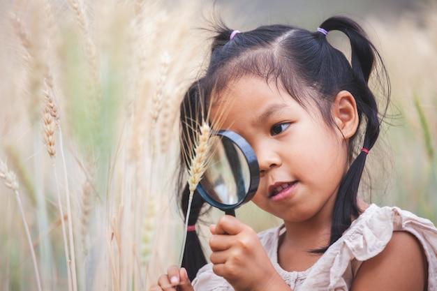 Милая азиатская девушка ребенка смотря колосья пшеницы через лупу в поле ячменя