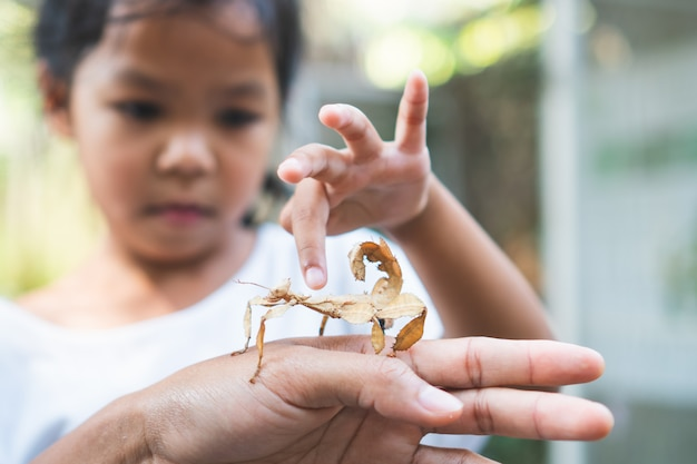 Cute asian child girl looking and touching leaf grasshopper that stick on parent hand