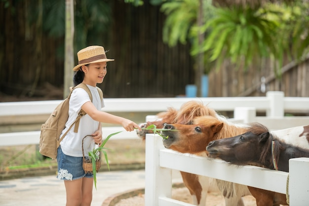 Cute asian girl is feeding grass to dwarf horse in stables. dwarf horses on the farm.