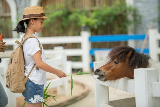 かわいいアジアの女の子は、厩舎で矮星の馬に草を与えています。農場の矮星。