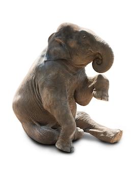 Милый ребенок азиатский слон на белом
