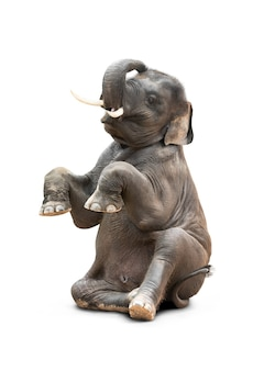 Cute baby asian elephant