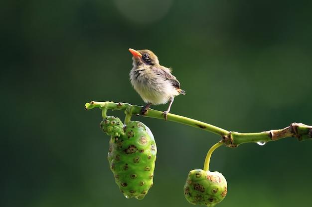 나뭇가지에 귀여운 아기 새