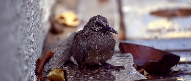 Cute baby bird sitting on the ground