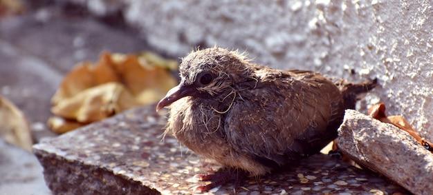 바닥에 앉아 있는 귀여운 아기 새