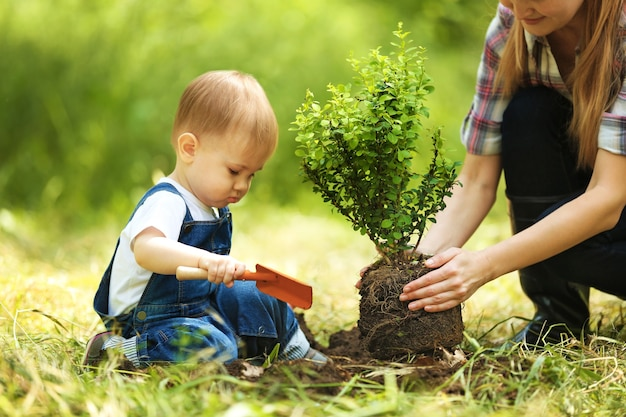 庭で親と一緒に木を植えるかわいい男の子