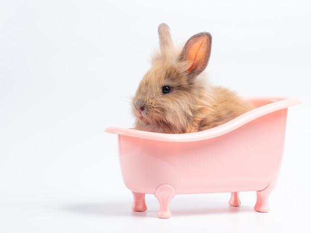 Cute baby brown rabbit in the pink bathtub