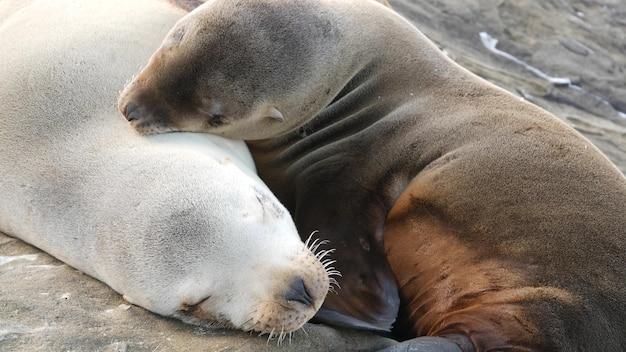 귀여운 아기 새끼, 달콤한 바다 사자 강아지와 어머니