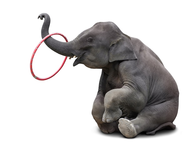 Cute baby elephant playing hulahoop isolated on white  with clipping path