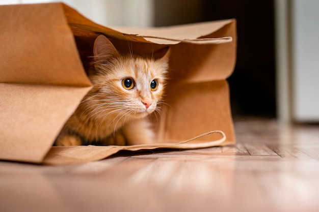Cute baby kitten sitting inside of brown paper grocery sack