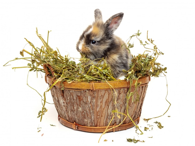 Cute baby rabbit in a wooden basket with dry grass