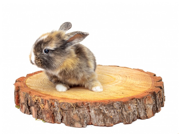 Cute baby rabbit on wooden saw cut pine