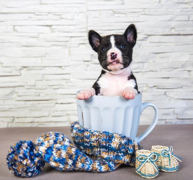 大きな青いカップに座っているかわいいバセンジーの子犬の犬