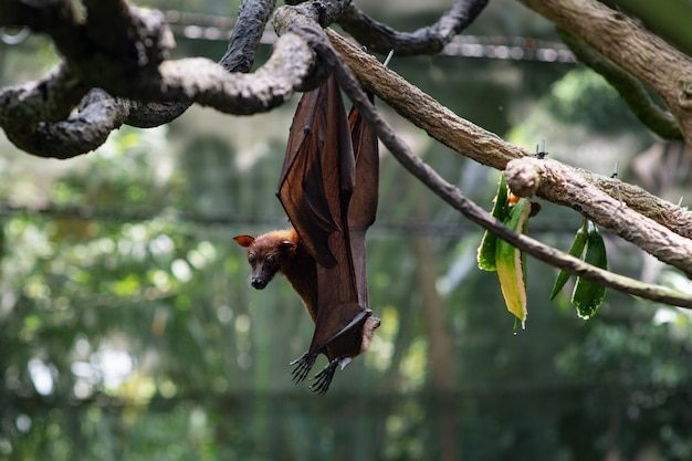 나뭇 가지에 매달려 귀여운 박쥐