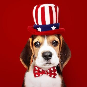 アンクルサムの帽子と蝶ネクタイのかわいいビーグル子犬