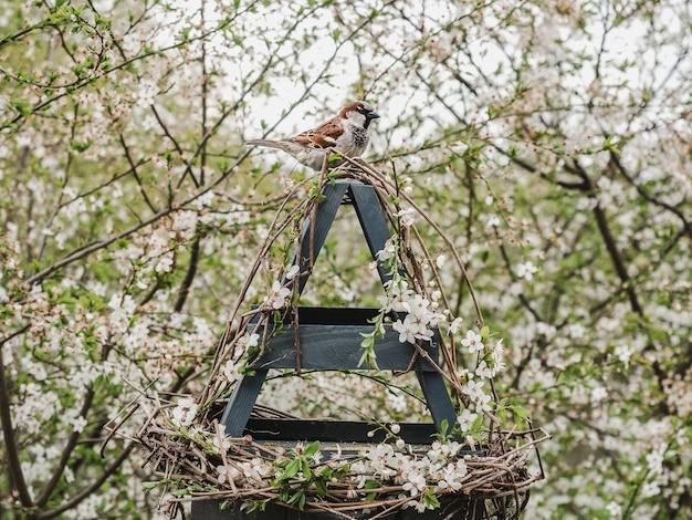 籐の餌箱にいるかわいい、美しい鳥。クローズアップ、屋外。明け。動物の世話の概念