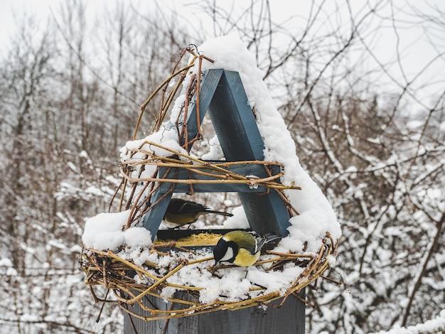 籐の餌箱にいるかわいい、美しい鳥。