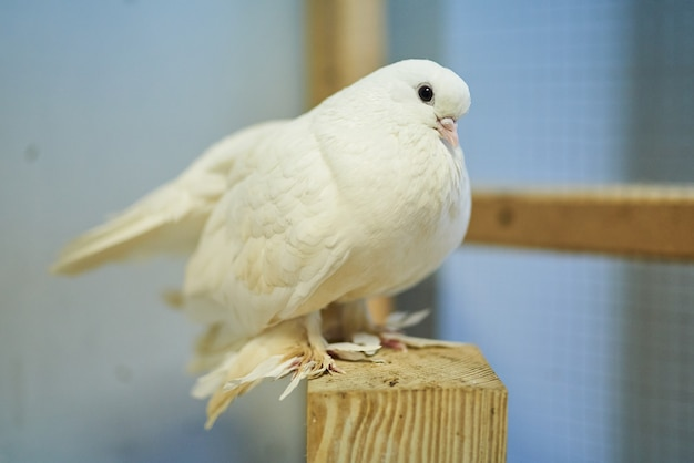 Милые красивые голуби в зоопарке