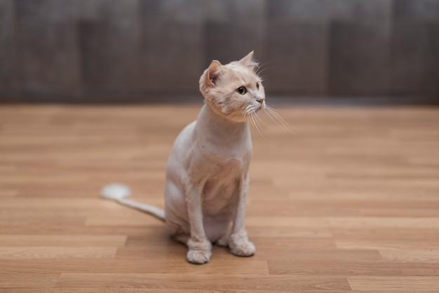 Cute beige cat sitting on floor