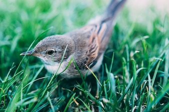 Cute bird sitting in grass