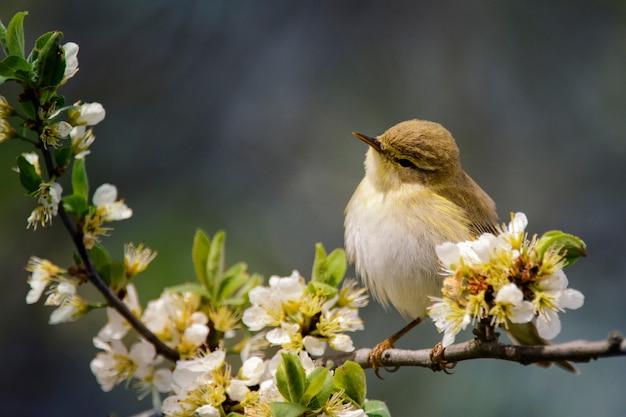 Милая птица сидит на цветущей ветке