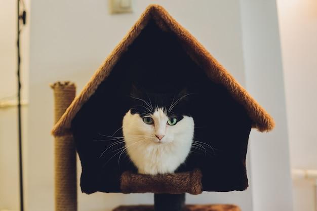 ペットの家でかわいい黒と白の猫。