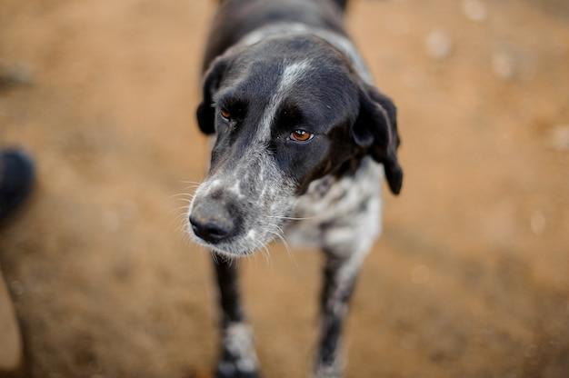 よそ見かわいい白黒ホームレス犬