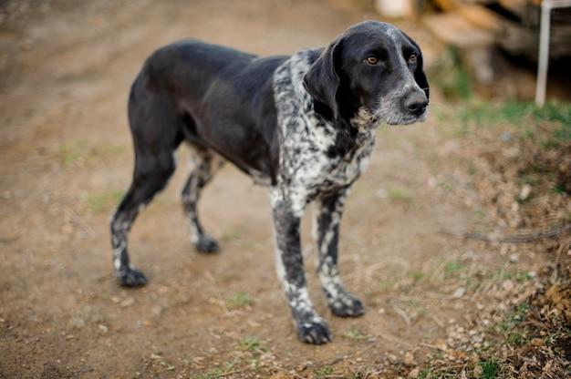 地面に立っているかわいい白黒のホームレス犬