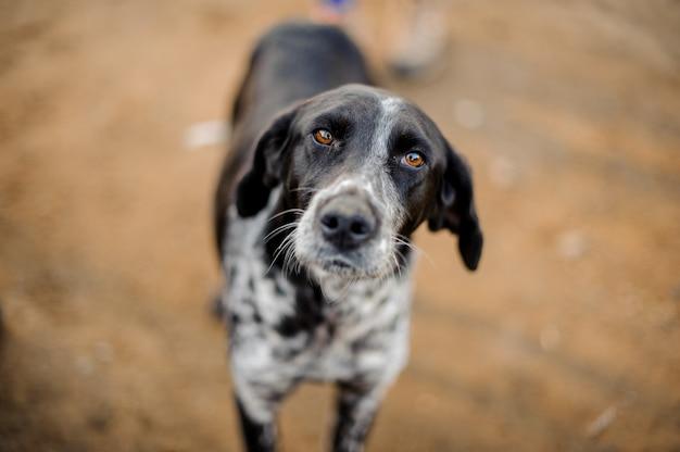 かわいい黒と白のホームレス犬