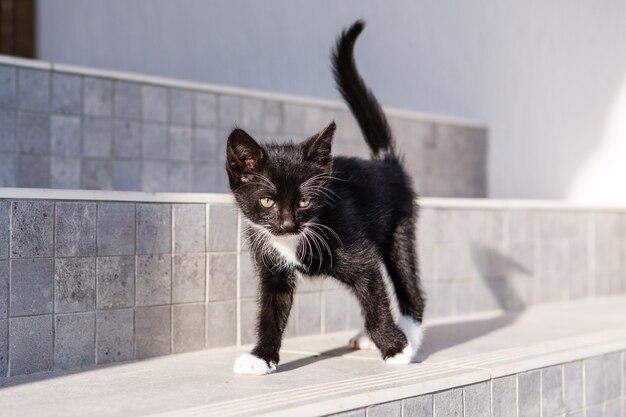 귀여운 흑인과 백인 새끼 고양이 거리 계단에 산책